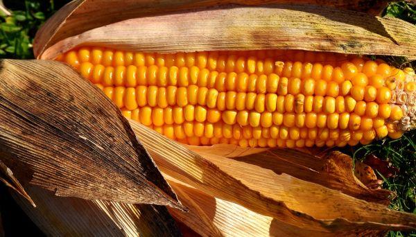Mais uit de Airfryer maken